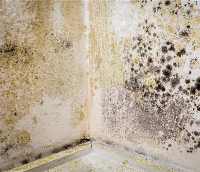 Mold Remediation SERVPRO - Removing Mold Damage From Little Rock Homes