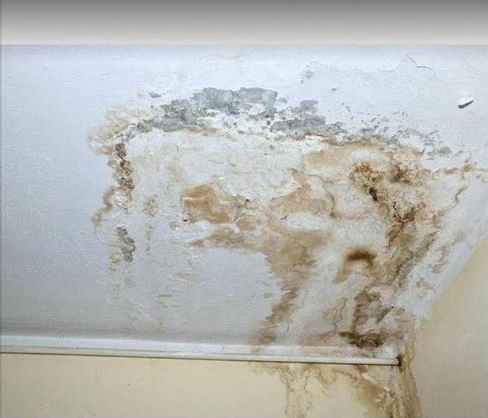 mold on ceiling and wall