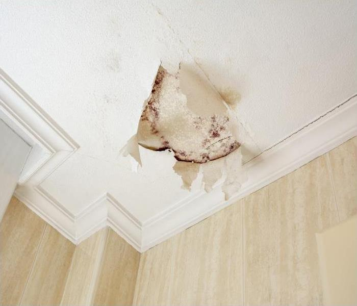 Why SERVPRO Mold Can Not Hide From Our Specialists In Little Rock