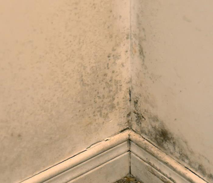 Why SERVPRO Don't Let Mold Become a Growing Issue in Your Little Rock Home