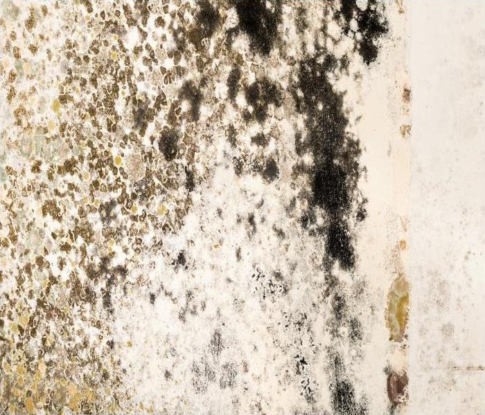 Commercial Mold Remediation For Growth In Your Little Rock Church